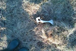Bone??